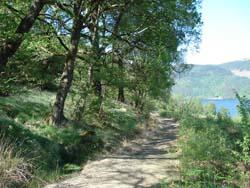 Cormonachan Woodlands